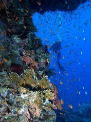 My buddy hovering by the reef, taken at Yolanda reef, Ras... by Nikki Van Veelen