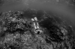 snorkelling between dives. by Gregory Grant