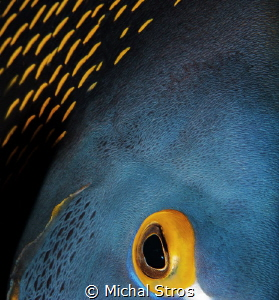 The Eye of French Angel Fish by Michal Stros