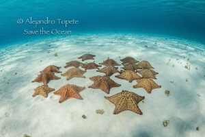 Stars in the sand, Cozumel México by Alejandro Topete