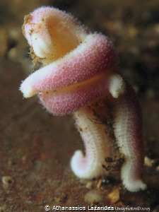 Sea star in a funny position by Athanassios Lazarides