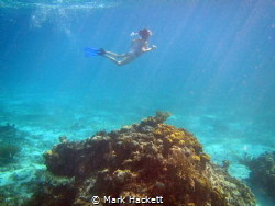 Snorkeling on Sunset Reef on the East Side of Grand Cayma... by Mark Hackett