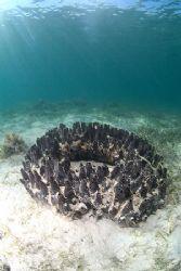 An old car tyre, or a black sponge?. 10.5mm. by Derek Haslam