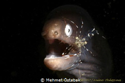 Marine Life/ Anilao-Philippines 2017 by Mehmet Öztabak