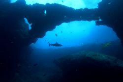 Shark Temple When I saw this reef shark swimming away fr... by João Paulo Krajewski