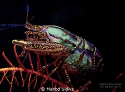 SNAPPING