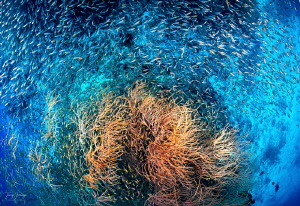 A simple coral and family by Tracey Jennings