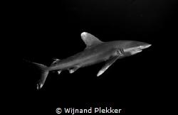 Oceanic by Wijnand Plekker
