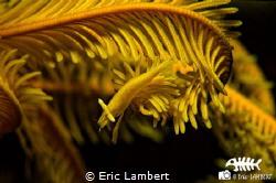 Beauty of the yellow by Eric Lambert