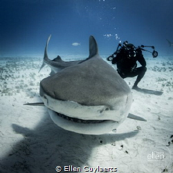 Be a shark! by Ellen Cuylaerts