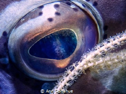 Coral polyps  reflection captured in a Nassau Grouper eye. by Ann Donahue