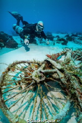 Diving at a popular site in Cozumel, my buddy and I found... by Gustavo Costa