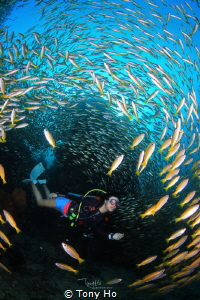 The divers go through a few thousand yellow snappers. by Tony Ho