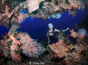 I can see a diver who loves diving. by Tony Ho