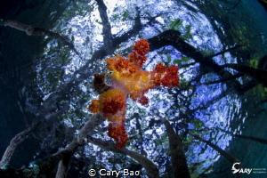Mongrove by Cary Bao
