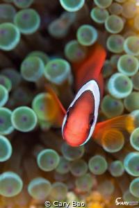 Nemo by Cary Bao