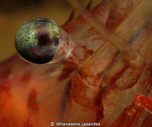 The eye of a shrimp by Athanassios Lazarides