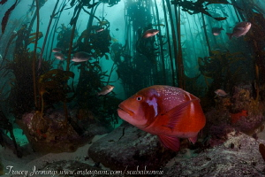 In the kelp by Tracey Jennings