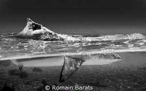 blacktip splitted by Romain Barats