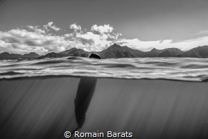 spermwhale splitted by Romain Barats