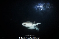 night dive on the spot light by Deniz Muzaffer Gökmen