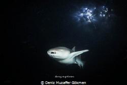 night dive on the spot light by Deniz Muzaffer Gökmen