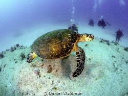 Picture taken at Punta Sur, Isla Mujeres by Daniel Waldman