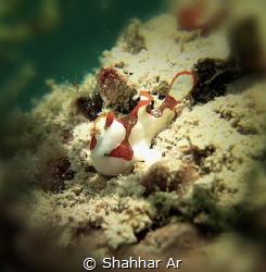 Sea Santa.. Ho Ho Ho, Merry Christmas! by Shahhar Ar