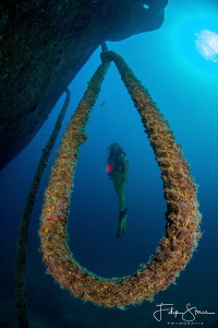 """Under the bow"", Fang Ming wreck, La Paz, Mexico. Model: ... by Filip Staes"