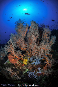 The Seas Flora and Fauna by Billy Watson