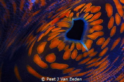 "Through the ""eye"" of a  giant sea clam by Peet J Van Eeden"