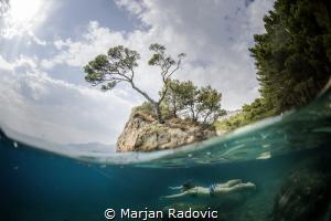 Brela TREE by Marjan Radovic