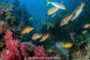 The action. Richelieu Rock, Surin islands. by Mehmet Salih Bilal