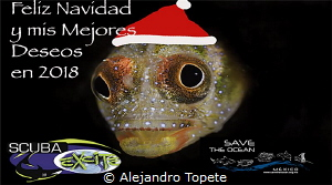 Merry Chrismas Blenny, Acapulco Mexico by Alejandro Topete