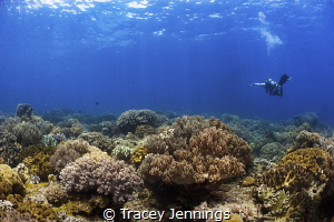 When your dive master doesn't think you are looking ! Apo... by Tracey Jennings
