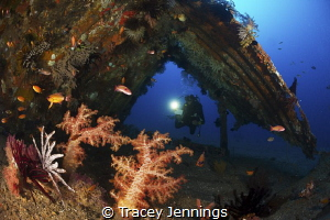 Model in artificial reef at Atmosphere Resorts by Tracey Jennings