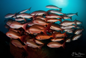 """""""Passing by"""", Fiabacet, Raja Ampat. by Filip Staes"""
