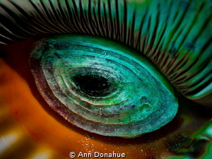 Looks like an eye  but what is it? It's the underside of ... by Ann Donahue