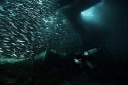 Schooling Fish Under the Jetty Arborek Island Raja Ampat by Wawan Mangile