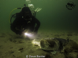 diver with stargazer by Dave Baxter