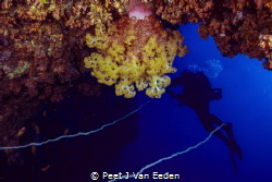 Soft coral magic by Peet J Van Eeden