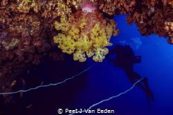 Soft coral magic by Peet J Van Eeden
