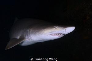 Hungry by Tianhong Wang