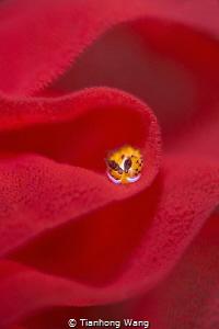 red carpet by Tianhong Wang