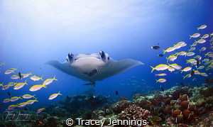 Coming through by Tracey Jennings