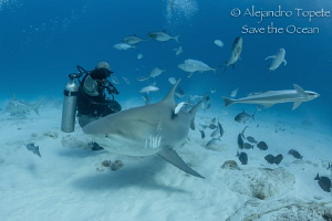 Happy Bull Shark Face, Playa del Carmen México by Alejandro Topete