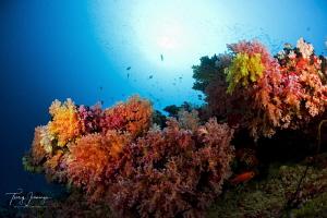 maldives by Tracey Jennings