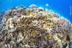 A coral reef of diversity by Macro Wu