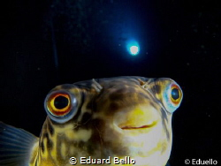 Made in clear water at TODI. by Eduard Bello