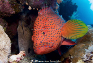 Moray and Grouper by Athanassios Lazarides